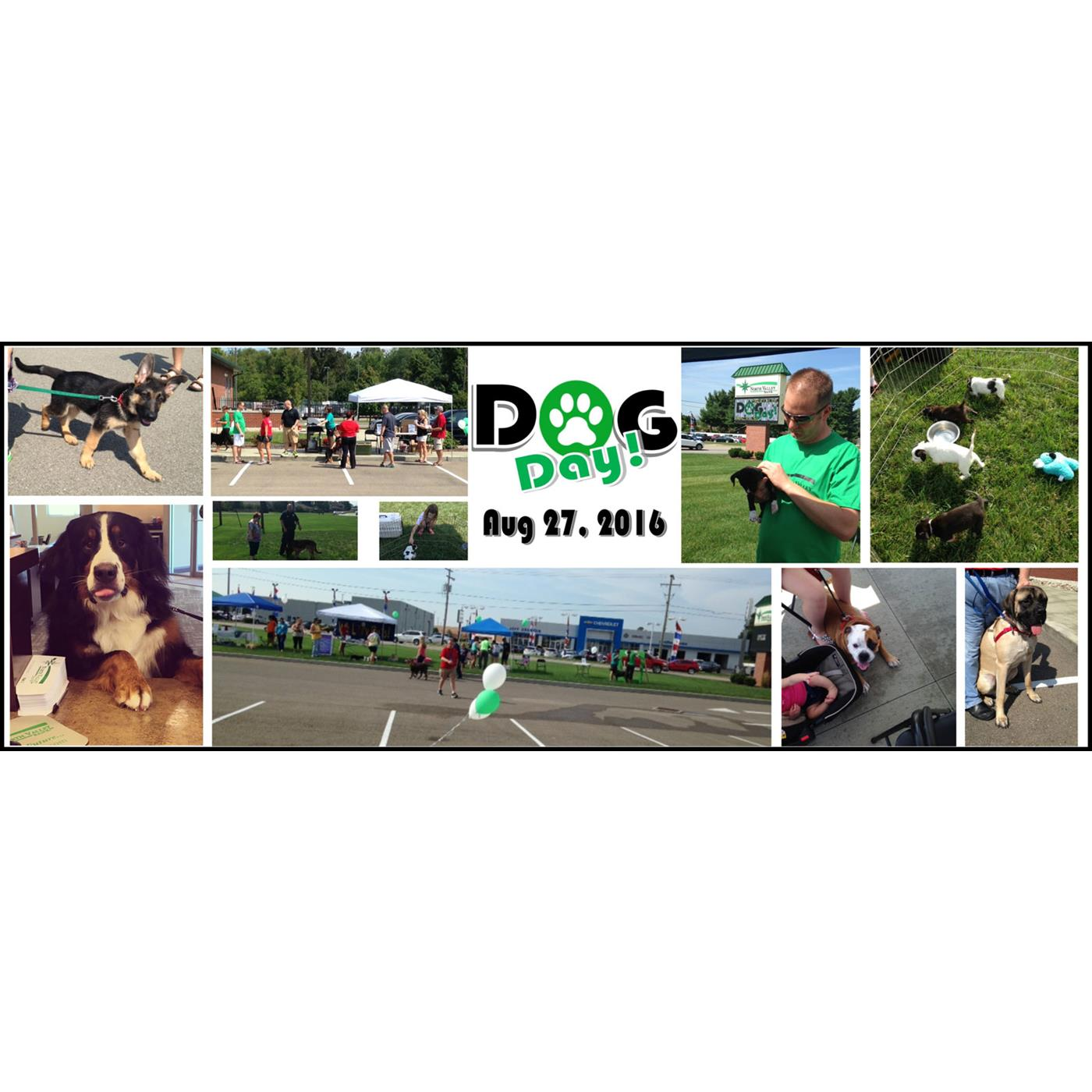 Community Bank Dog Day Collage